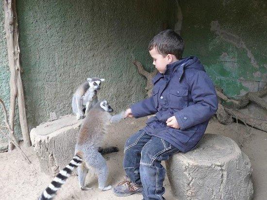 Castellar de la Frontera, Spanien: Lemur fun
