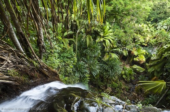 Anse Volbert, Seychelles: An important source of water for Praslin, Vallee de Mai boasts a beautiful waterfall