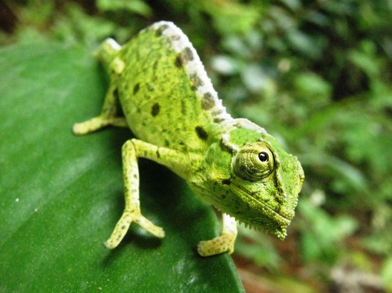 At Around 1cm Long The Sooglossid Frog Can Be Hard To Find