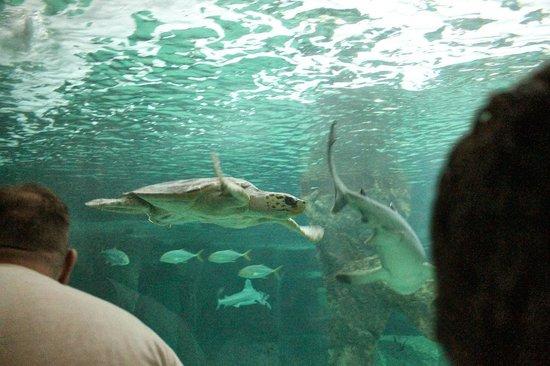 Zoo Aquarium de Madrid : Aquarium