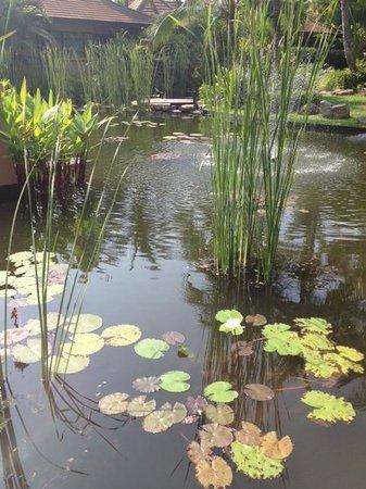 Bo Phut Resort & Spa: The pond
