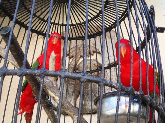 Crown Regency Suites Mactan: Birds