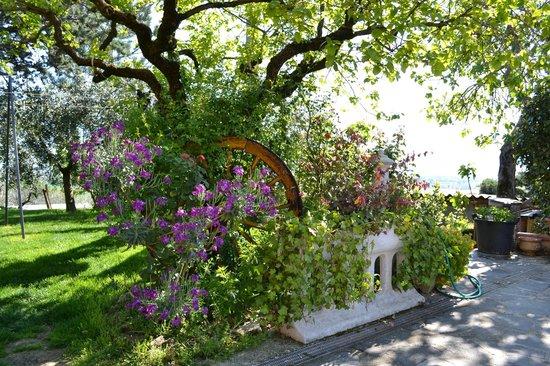 Agriturismo L'Ulivo in Fiore : giardino