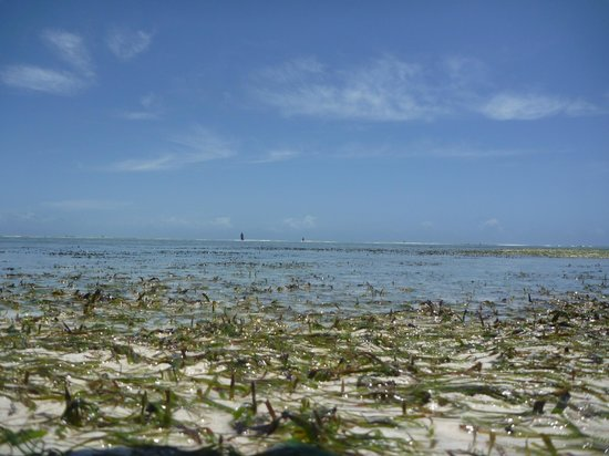 Next Paradise Boutique Resort: Low tide - it really goes out a looooong way!