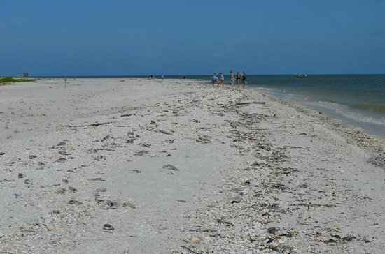 Marco Island Marriott Resort, Golf Club & Spa : catamaran ride to a nice shelling spot