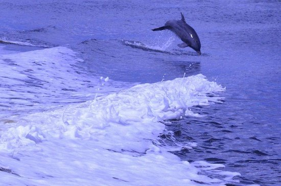 Marco Island Marriott Resort, Golf Club & Spa : you may see dolphins up close on the catamaran ride