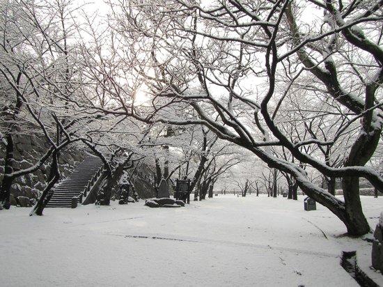 Iwate Park (Koen): 早朝の雪景色