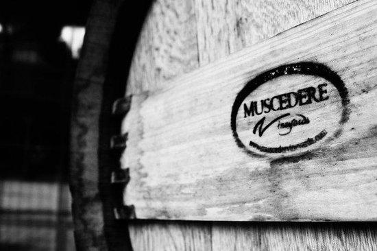 Muscedere Vineyards: Barrels