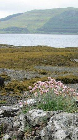 Craigrowan: nature surrounding Pennyghael
