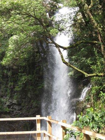 Kawazu Nanadaru Waterfalls: 釜滝