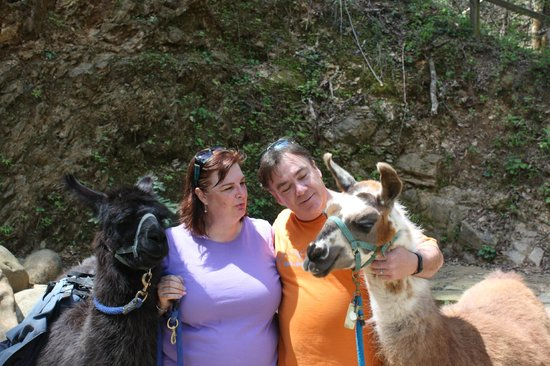 Smoky Mountain Llama Treks - Day Tours: Llamas BlackJack and Taylee