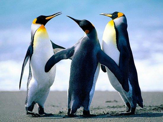 Zoo Basel : Pinguine sind da