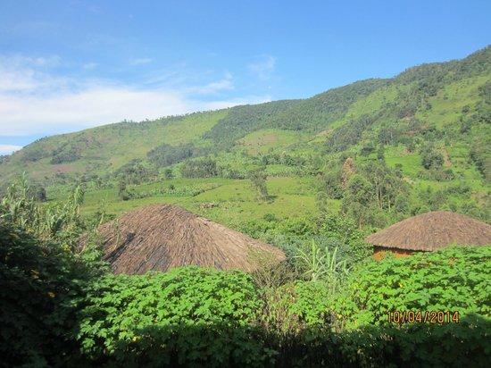 Mahogany Springs : view