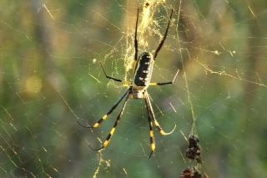 "Shikwari Game Reserve: ""The 15 minute spider"""