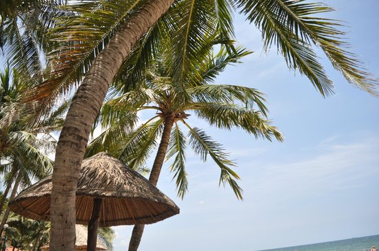 Saigon Phu Quoc Resort : Cocotiers