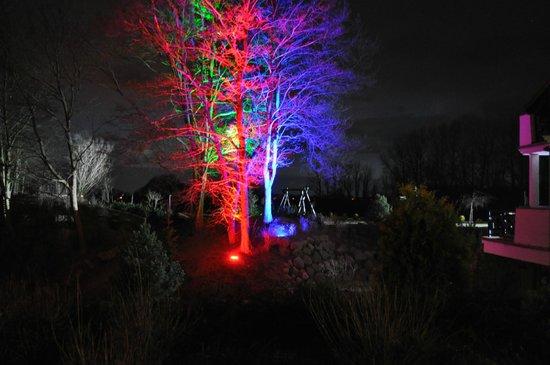 Trzebiatów, Polska: Nocna iluminacja drzewa od strony sali kominkowej