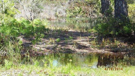 Big Lagoon State Park : one of many salt marsh & small ponds