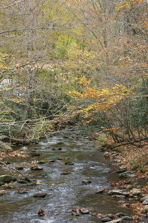 Cataloochee Valley : stream