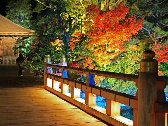 Shiramizu Amidado: 周辺のライトアップ