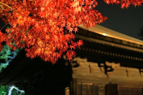 Shiramizu Amidado: 紅葉はなかなかです