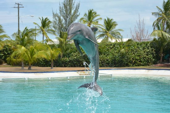 Dolphin Cove Cayman: Great place