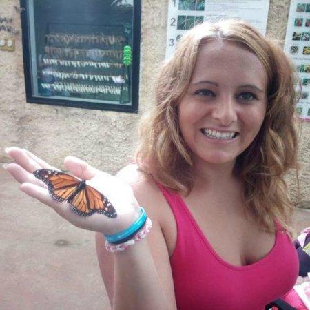 """Butterfly Park of Benalmadena : Las monarcas eran las más """"sociables"""""""