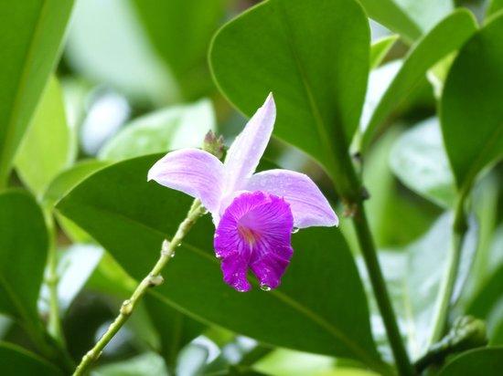 Evergreen Lodge: Orquídea