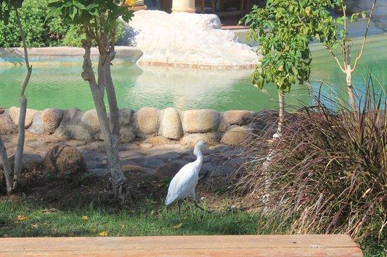 Laguna Vista Beach Resort: территория отеля