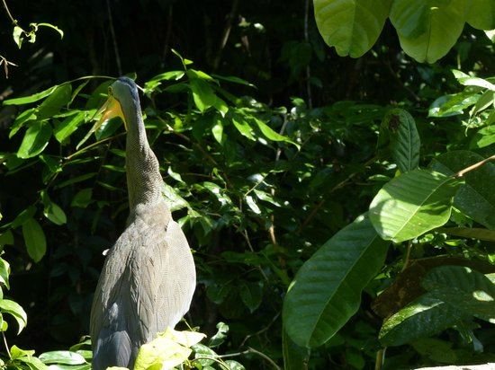 Parque Nacional Tortuguero: Entrada al parque