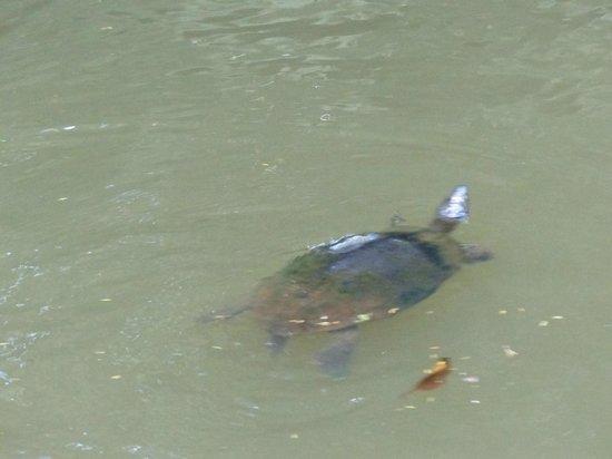Parque Nacional Tortuguero: Canal Harold