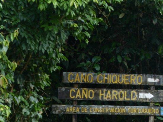 Parque Nacional Tortuguero: Parque Nacional
