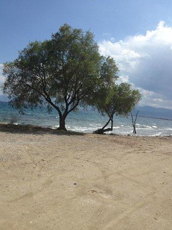 Protessilaos Hotel: beach view