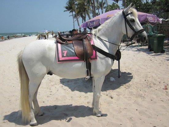 Jaidee Resort: Nere vid stranden erbjöds man att ta sig fram via häst.