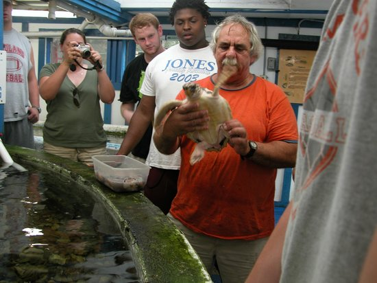 Gulf Specimen Marine Lab & Aquarium: Jack Rudloe showing sea turtle