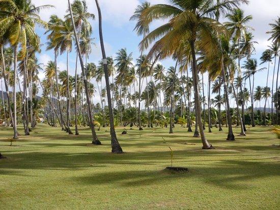 Club Med Les Boucaniers : la palmeraie