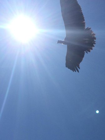 Condor's Cross: condors