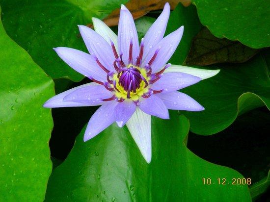 Jardin de Balata : Jardine de Balata