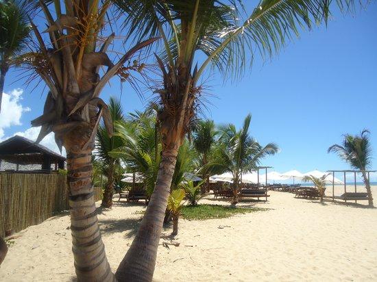 Coqueiros Beach: playa