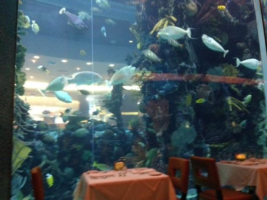 Chart house fish tank picture of chart house restaurant for Fish tank las vegas