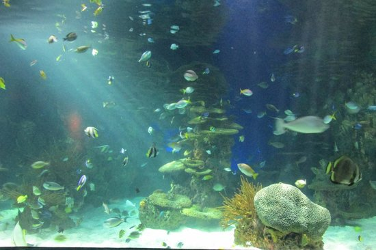 Ripley's Aquarium of the Smokies : Groups of fish