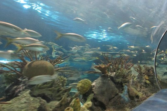 Ripley's Aquarium of the Smokies : Fish