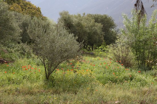 Domaine de la Roseraie : Olive trees and meadow