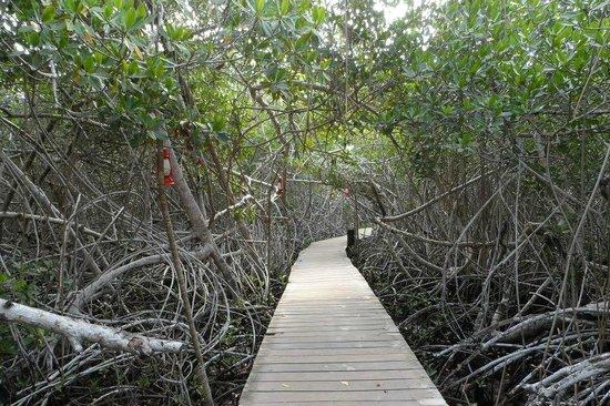 Decameron Barú: Acceso entre manglares a la segunda zona de playa