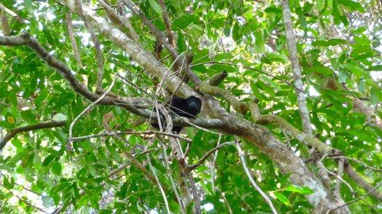 Mango Moon Villa : Passing monkey