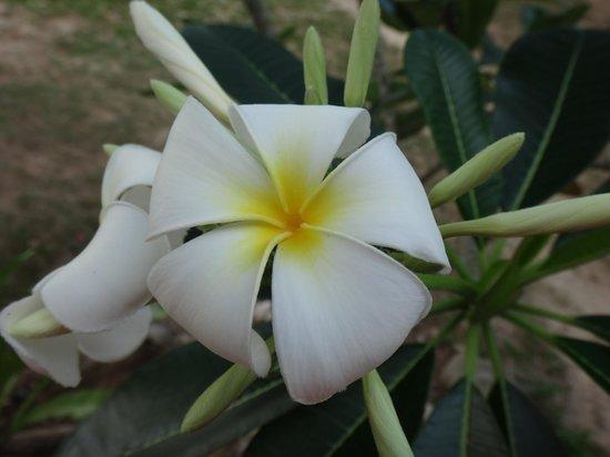 Keranji Beach: flora
