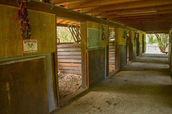 Arabian Farm Luxury Villas Image