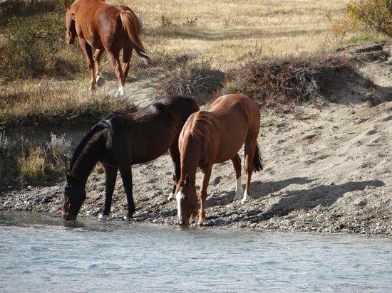 Estancia Cristina: Cavalos na Estância