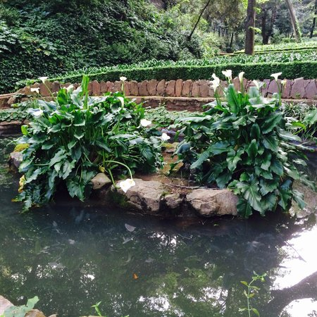 Parque del Laberinto de Horta: Пруд с лилиями