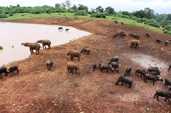 The Ark: The animals at the waterhole