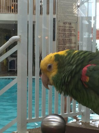 Quality Inn Oceanfront: Fenwick the bird